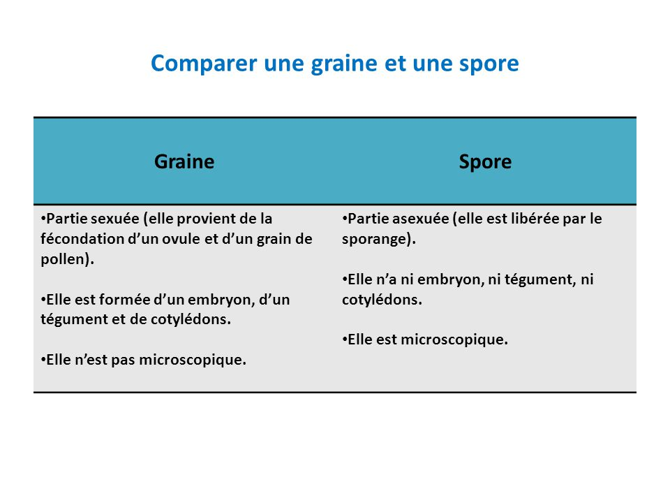 Comparer une graine et une spore GraineSpore • Partie sexuée (elle provient de la fécondation d'un ovule et d'un grain de pollen). • Elle est formée d
