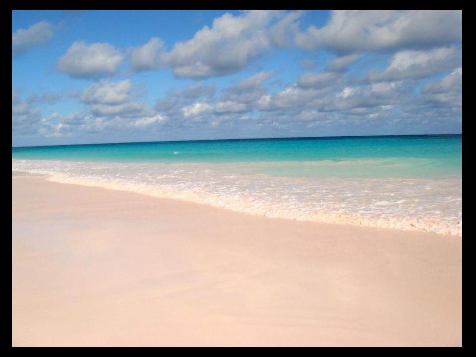 Pink Sand Coral Beach Plage de sable rose aux Bahamas