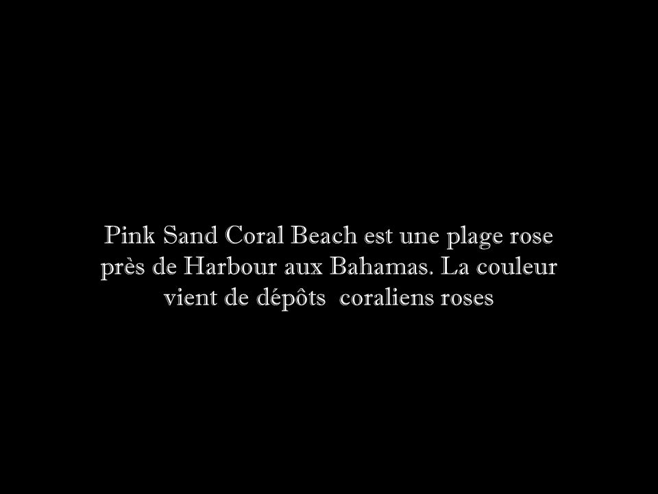 Pink Sand Coral Beach est une plage rose près de Harbour aux Bahamas.