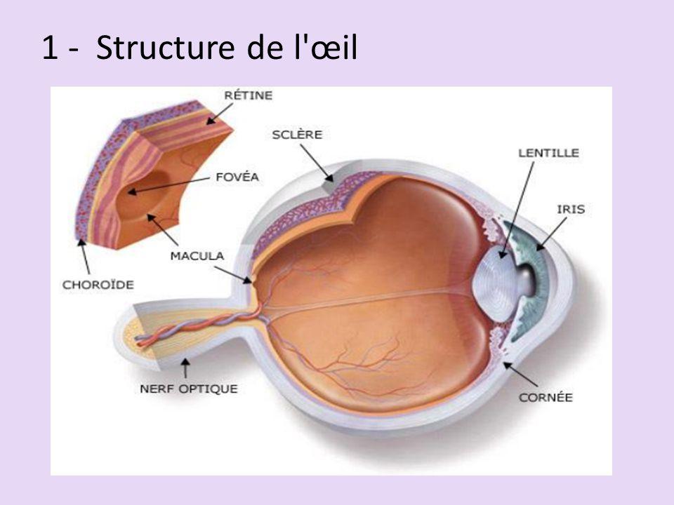 1 - Structure de l'œil