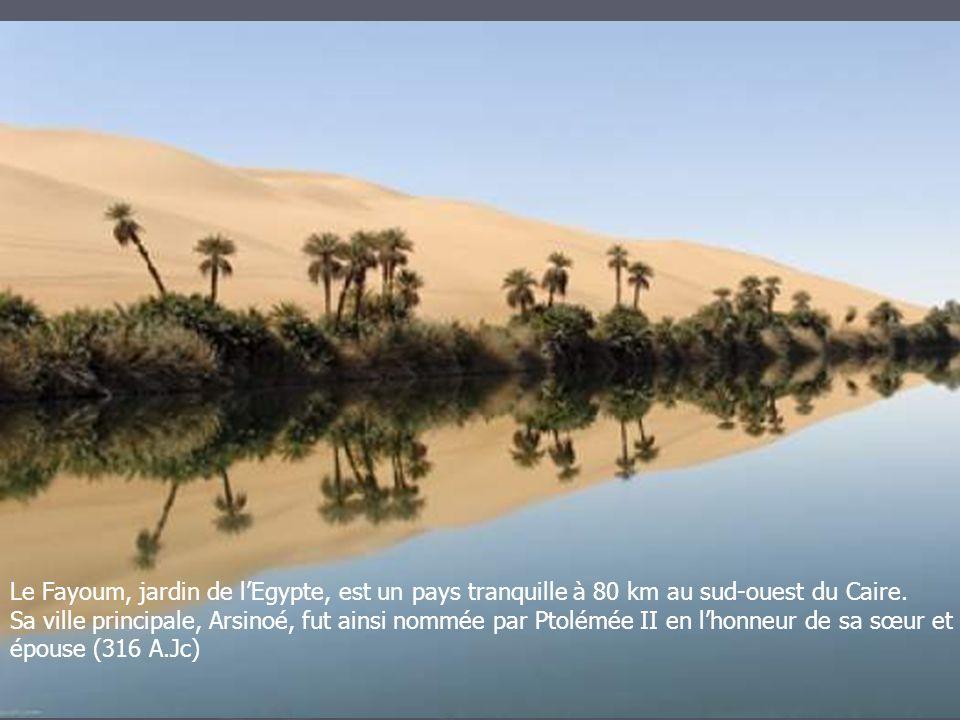 Le Fayoum, jardin de l'Egypte, est un pays tranquille à 80 km au sud-ouest du Caire. Sa ville principale, Arsinoé, fut ainsi nommée par Ptolémée II en