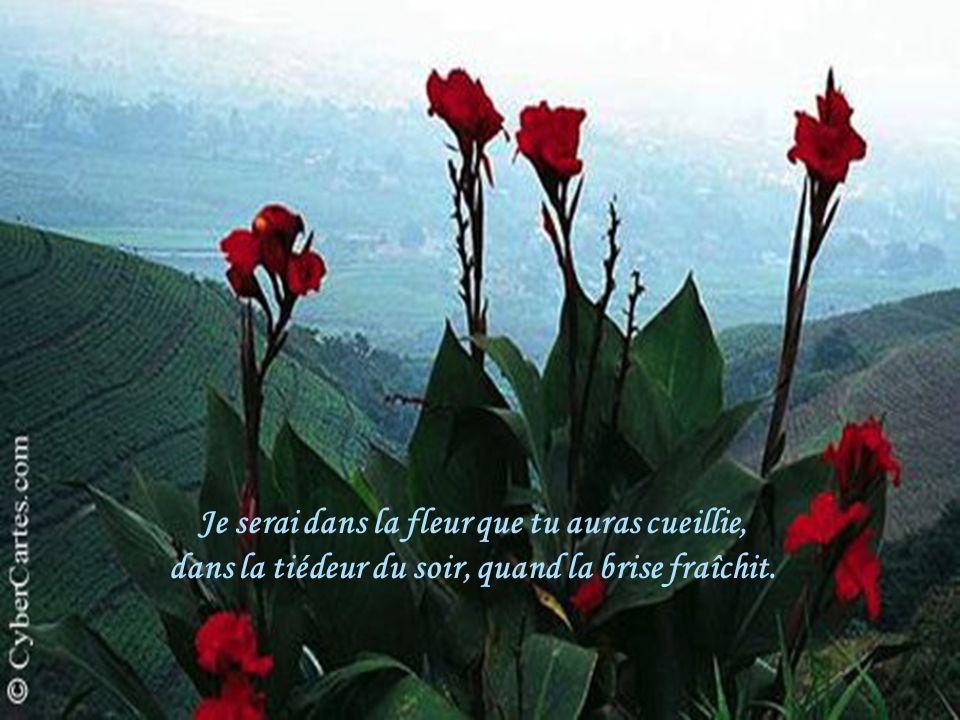 Je serai dans la fleur que tu auras cueillie, dans la tiédeur du soir, quand la brise fraîchit.