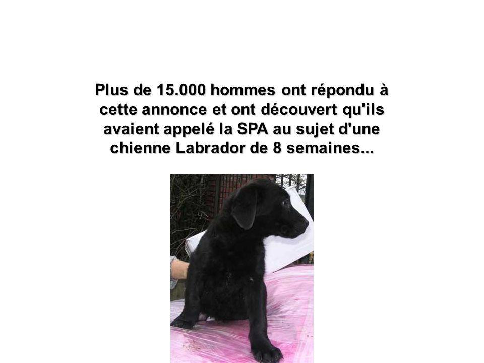 Plus de 15.000 hommes ont répondu à cette annonce et ont découvert qu ils avaient appelé la SPA au sujet d une chienne Labrador de 8 semaines...