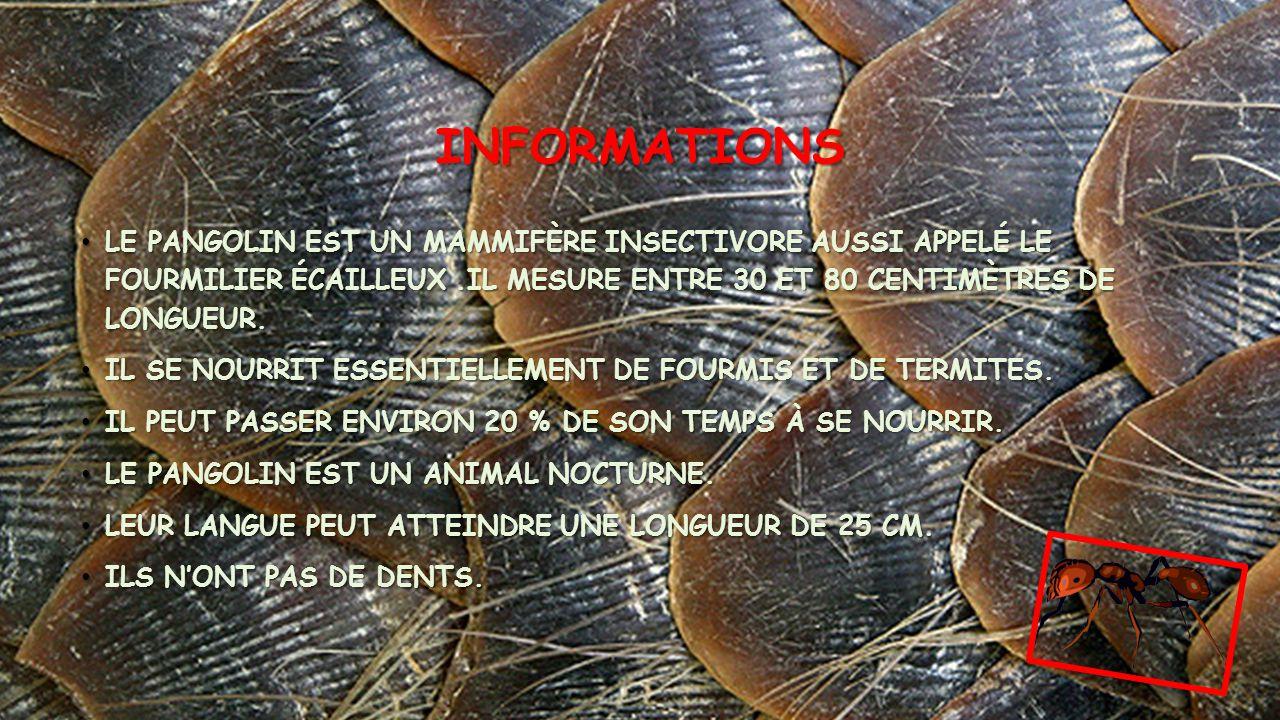 INFORMATIONS • LE PANGOLIN EST UN MAMMIFÈRE INSECTIVORE AUSSI APPELÉ LE FOURMILIER ÉCAILLEUX.IL MESURE ENTRE 30 ET 80 CENTIMÈTRES DE LONGUEUR.