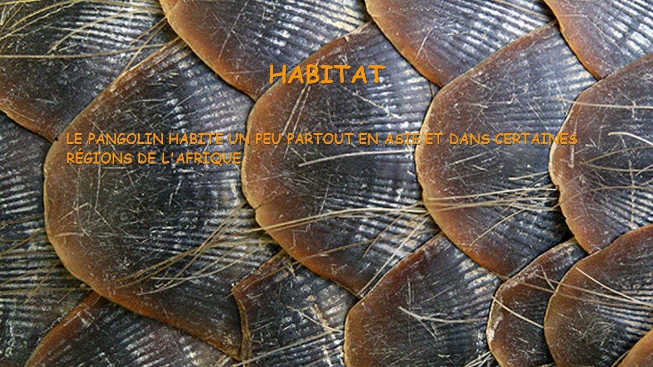 HABITAT • LE PANGOLIN HABITE UN PEU PARTOUT EN ASIE ET DANS CERTAINES RÉGIONS DE L'AFRIQUE • LE PANGOLIN HABITE UN PEU PARTOUT EN ASIE ET DANS CERTAIN