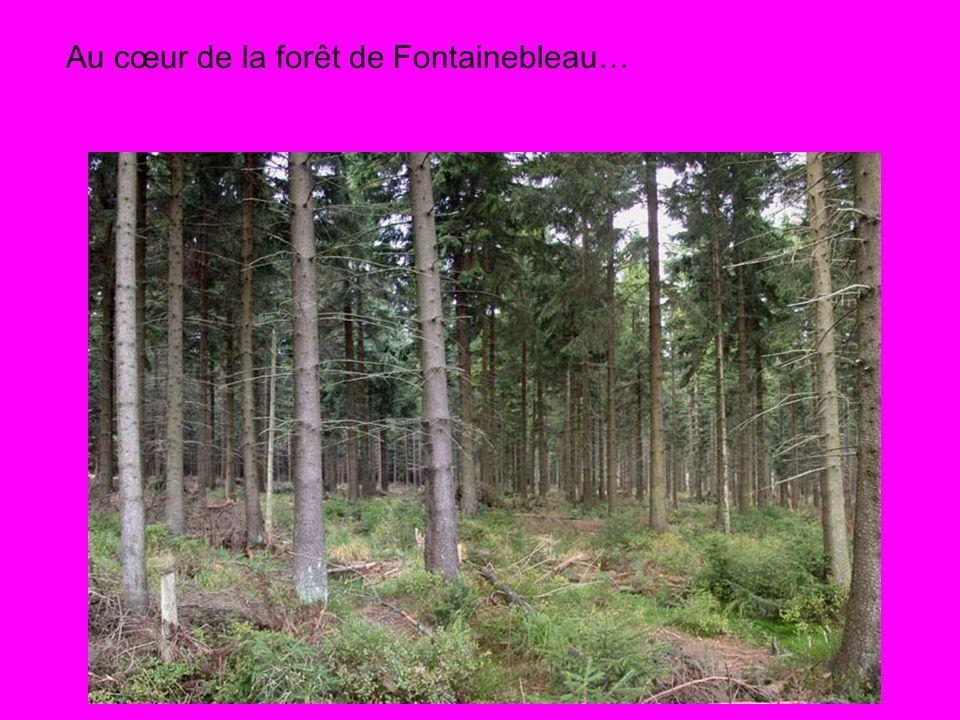 Au cœur de la forêt de Fontainebleau…