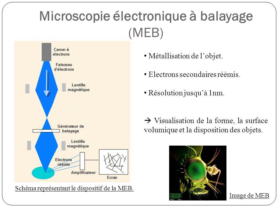 Microscopie électronique à balayage (MEB) Schéma représentant le dispositif de la MEB.