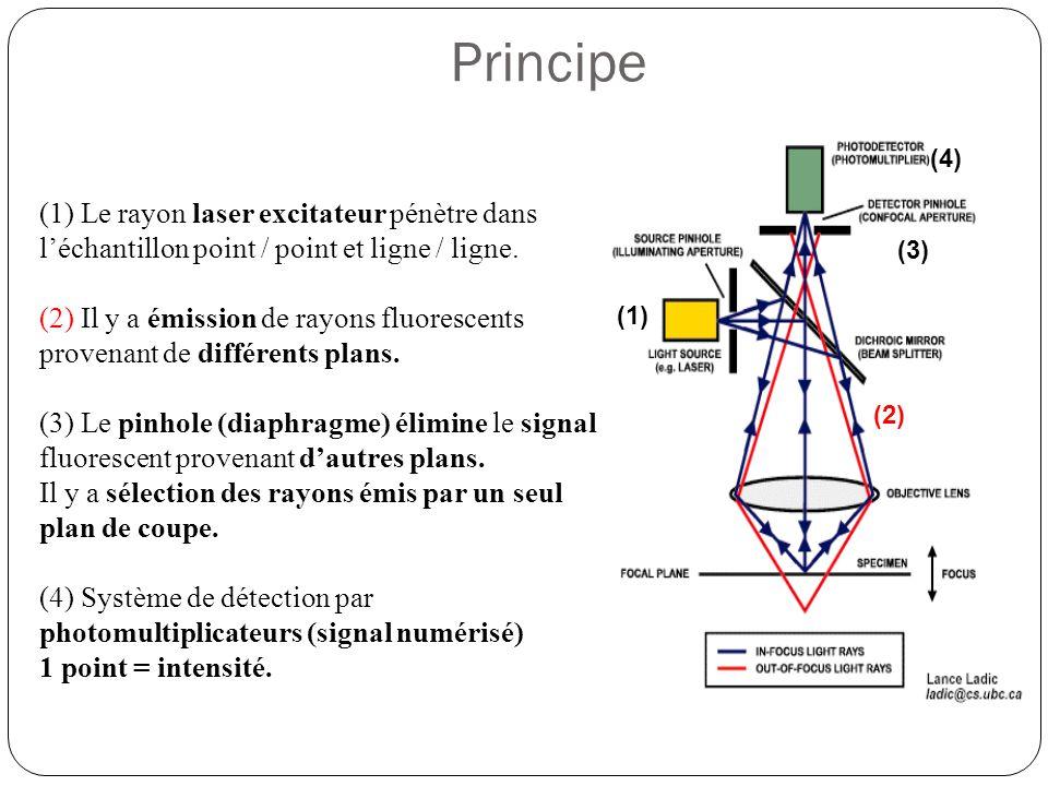 (1) Le rayon laser excitateur pénètre dans l'échantillon point / point et ligne / ligne.