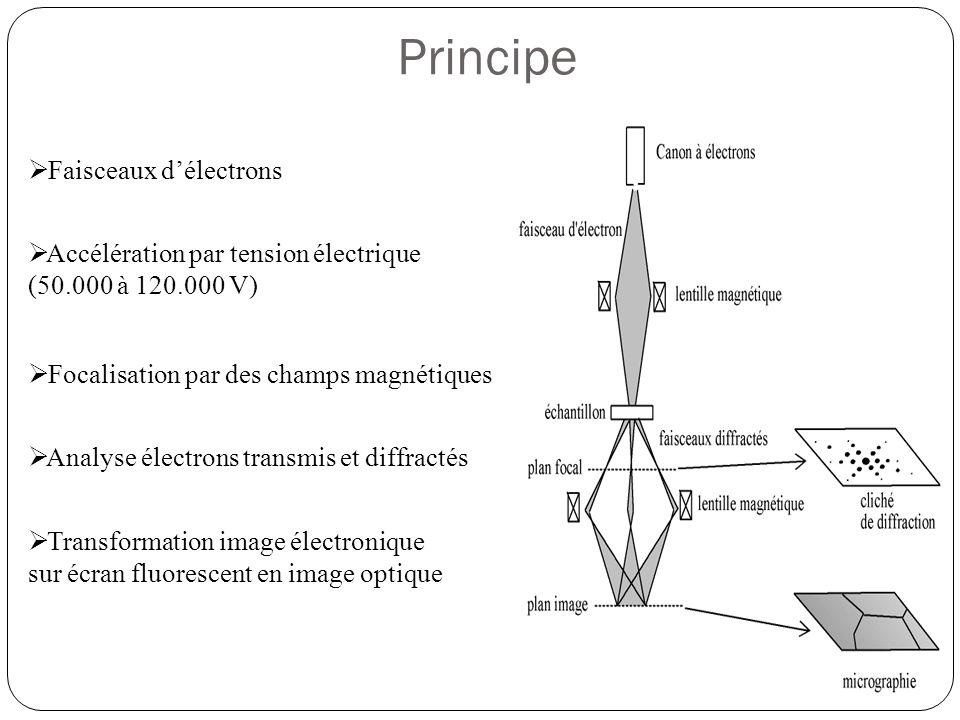 Composition  Source d'illumination : • Source d'électrons (cylindre de Wehnelt + champ électrique)  Platine porte objet • Condenseur = lentille électromagnétique