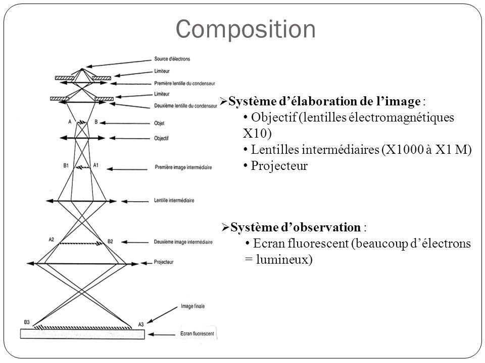Composition  Système d'élaboration de l'image : • Objectif (lentilles électromagnétiques X10) • Lentilles intermédiaires (X1000 à X1 M) • Projecteur  Système d'observation : • Ecran fluorescent (beaucoup d'électrons = lumineux)