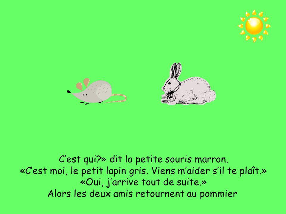 Le lapin sautille, le lapin sautille vers la maison de la petite souris marron. Toc, toc, toc!
