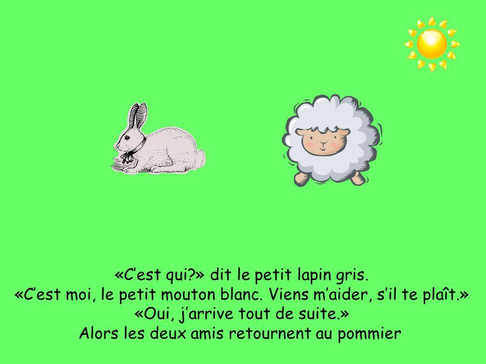 Le mouton court, le mouton court vers la maison du petit lapin gris. Toc, toc, toc!