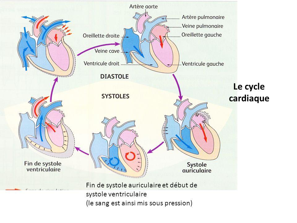 Fin de systole auriculaire et début de systole ventriculaire (le sang est ainsi mis sous pression) Le cycle cardiaque