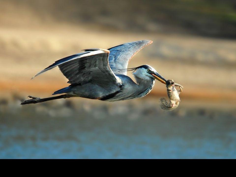 Migration de sardines près des côtes d'Afrique du Sud