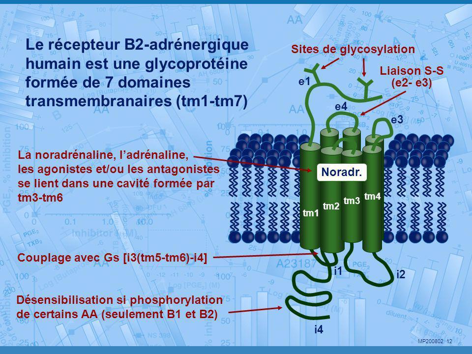 MP200802 12 i2 i4 i1 Désensibilisation si phosphorylation de certains AA (seulement B1 et B2) Noradr. Le récepteur B2-adrénergique humain est une glyc