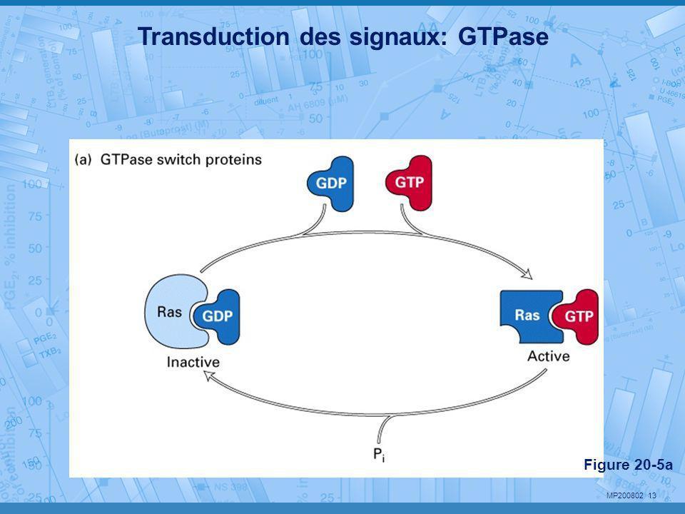 MP200802 13 Transduction des signaux: GTPase Figure 20-5a