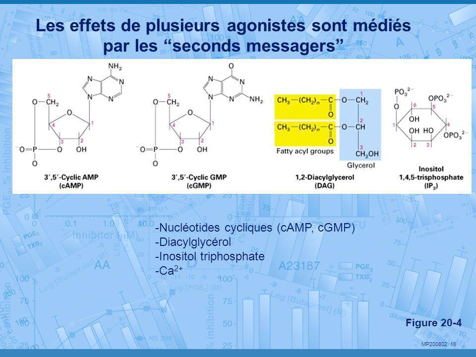"""MP200802 16 Les effets de plusieurs agonistes sont médiés par les """"seconds messagers"""" Figure 20-4 -Nucléotides cycliques (cAMP, cGMP) -Diacylglycérol"""