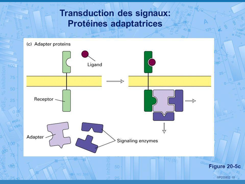 MP200802 18 Transduction des signaux: Protéines adaptatrices Figure 20-5c