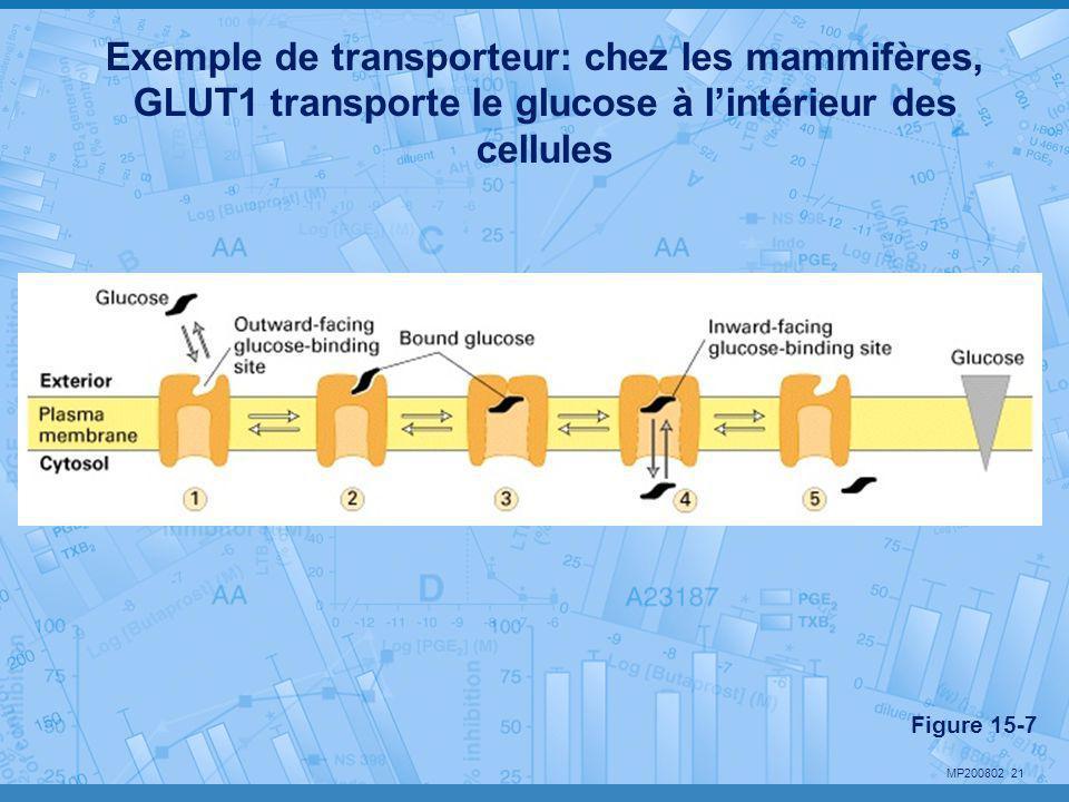 MP200802 21 Exemple de transporteur: chez les mammifères, GLUT1 transporte le glucose à l'intérieur des cellules Figure 15-7