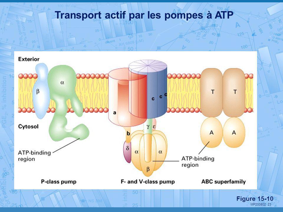 MP200802 23 Transport actif par les pompes à ATP Figure 15-10