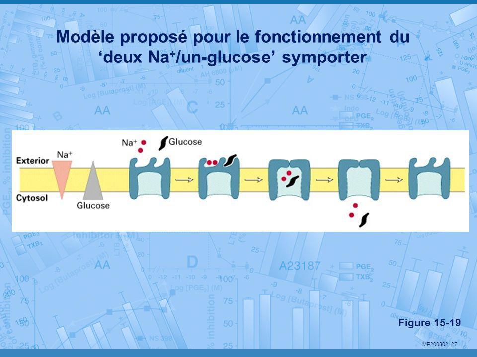 MP200802 27 Modèle proposé pour le fonctionnement du 'deux Na + /un-glucose' symporter Figure 15-19