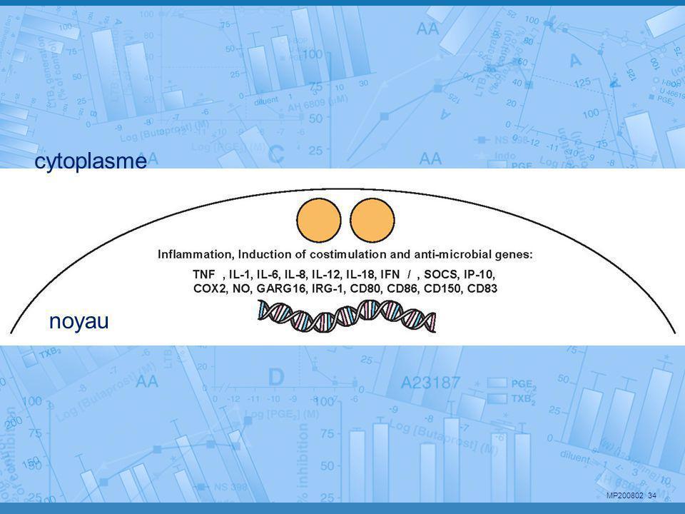 MP200802 34 cytoplasme noyau