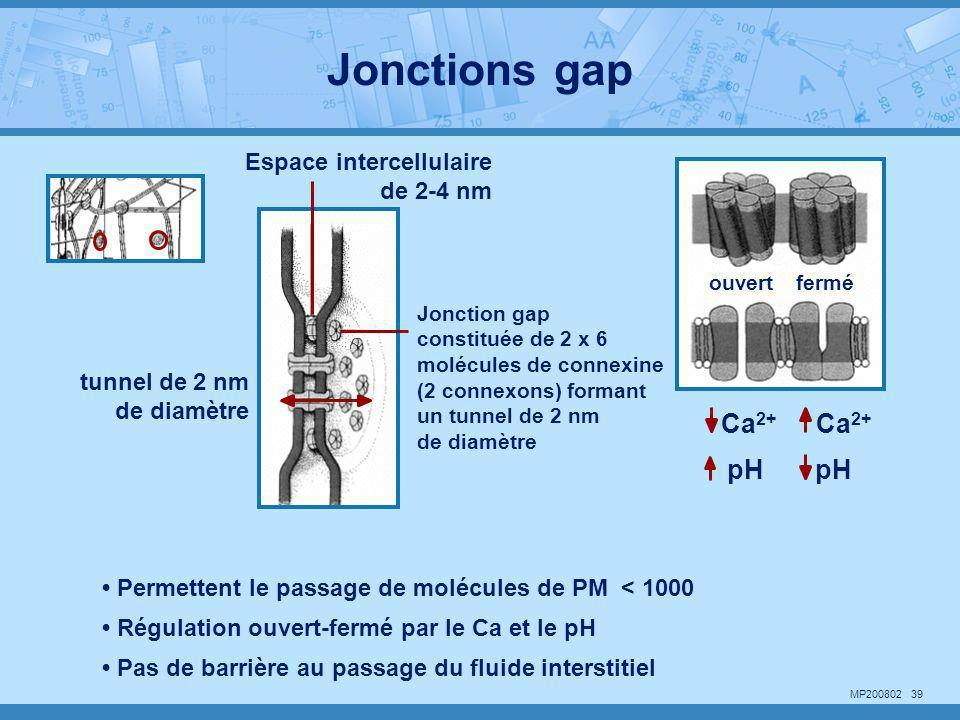 MP200802 39 Espace intercellulaire de 2-4 nm Jonction gap constituée de 2 x 6 molécules de connexine (2 connexons) formant un tunnel de 2 nm de diamèt