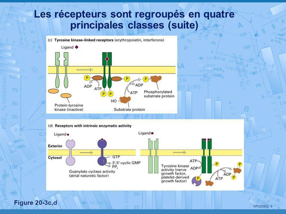 MP200802 40 500 nm Membrane plasmique Espace intercellulaire de 20 nm cellule 1 cellule 2 cadhérines Tonofilaments (kératine) Plaque cytoplasmique (desmoplakines et plakoglobines) •Boulons intercellulaires •Pas de barrière au passage du fluide interstitiel Desmosome ponctuel