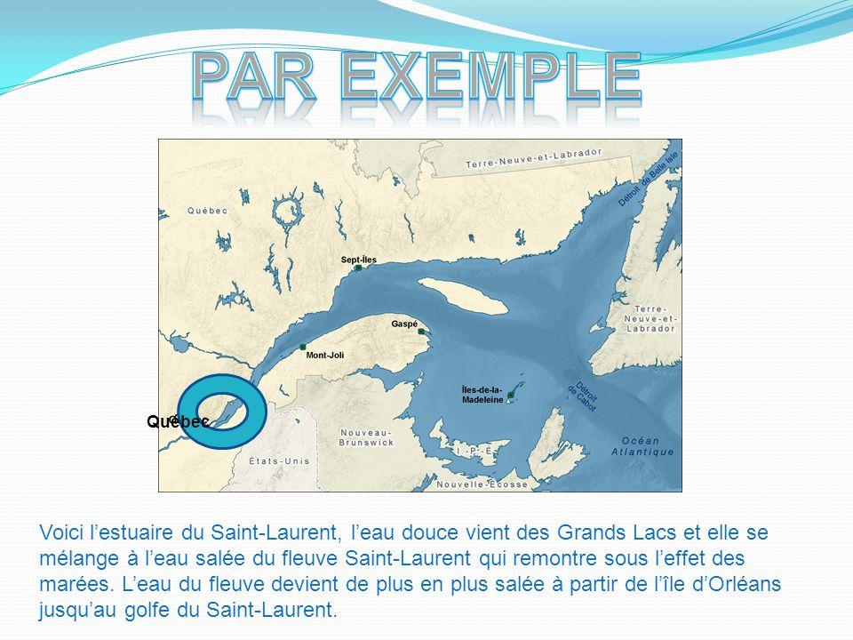 Québec Voici l'estuaire du Saint-Laurent, l'eau douce vient des Grands Lacs et elle se mélange à l'eau salée du fleuve Saint-Laurent qui remontre sous