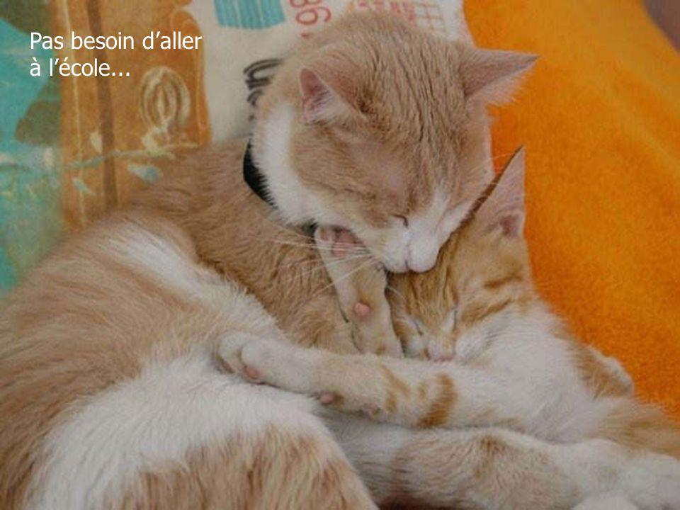 Retrouvez les meilleurs diaporamas PPS d'humour et de divertissement sur http://www.diaporamas-a-la-con.com http://www.diaporamas-a-la-con.com Zen !