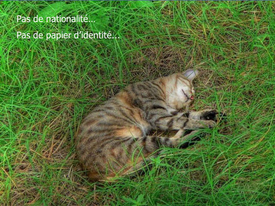 Pas de nationalité… Pas de papier d'identité...