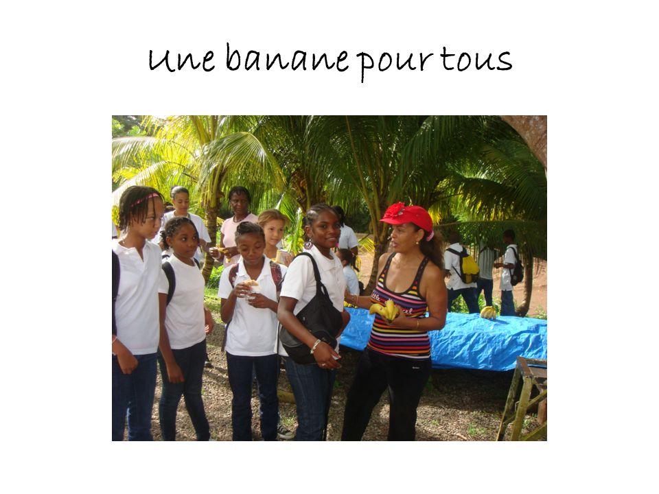 Une banane pour tous