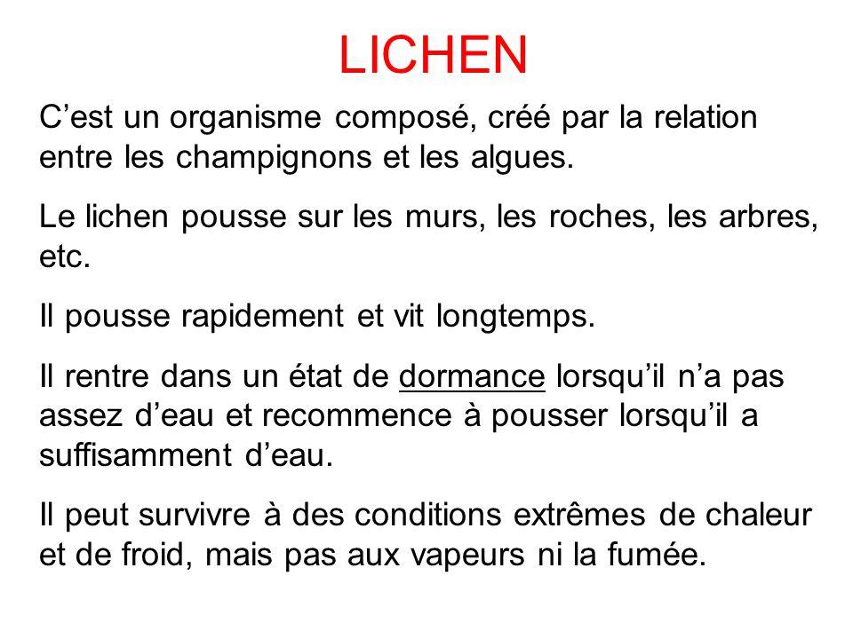 LICHEN C'est un organisme composé, créé par la relation entre les champignons et les algues. Le lichen pousse sur les murs, les roches, les arbres, et