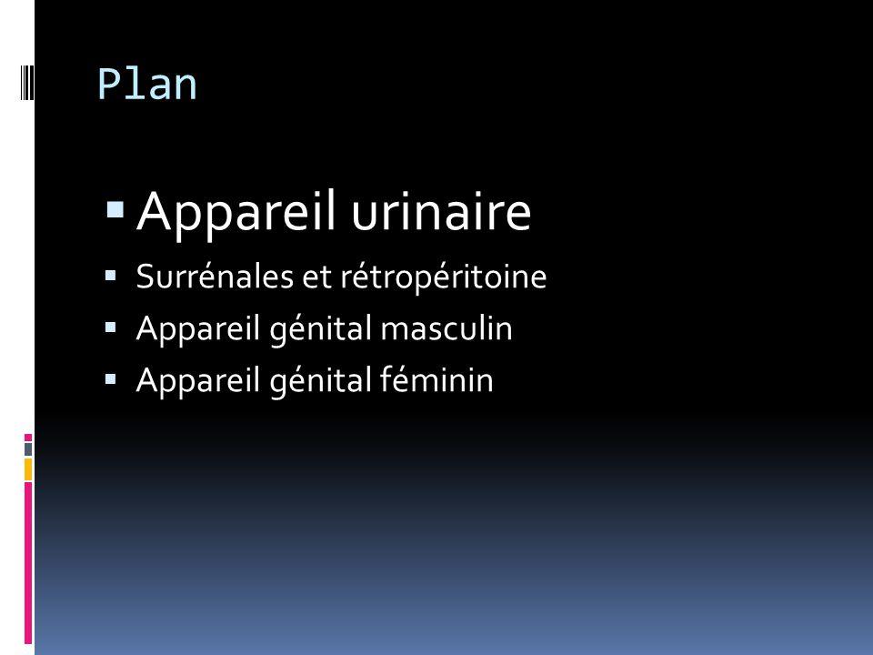 Plan  Appareil urinaire  Surrénales et rétropéritoine  Appareil génital masculin  Appareil génital féminin