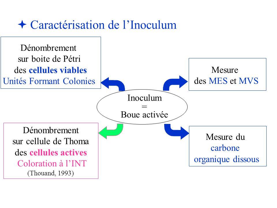   Caractérisation de l'Inoculum Inoculum = Boue activée Mesure du carbone organique dissous Mesure des MES et MVS Dénombrement sur boite de Pétri de
