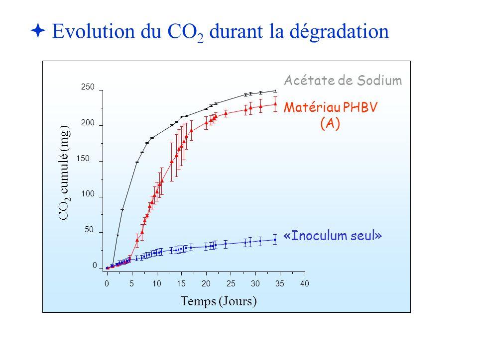   Evolution du CO 2 durant la dégradation 0510152025303540 0 50 100 150 200 250 CO 2 cumulé (mg) Temps (Jours) Acétate de Sodium Matériau PHBV (A) «