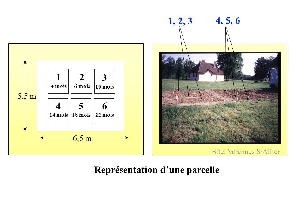 Représentation d'une parcelle 6,5 m 5,5 m 1 4 mois 1, 2, 3 4, 5, 6 Site: Varennes S/Allier 4 14 mois 6 22 mois 5 18 mois 2 6 mois 3 10 mois