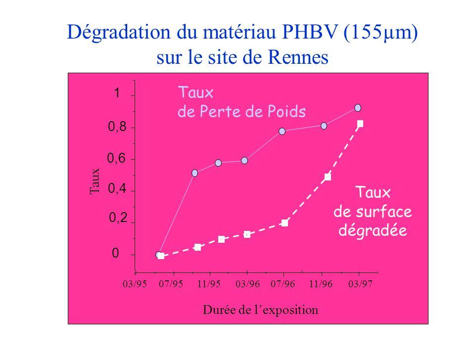 Dégradation du matériau PHBV (155µm) sur le site de Rennes 0 0,2 0,4 0,6 0,8 1 Taux 03/9507/9511/9503/9607/9611/9603/97 Durée de l'exposition Taux de
