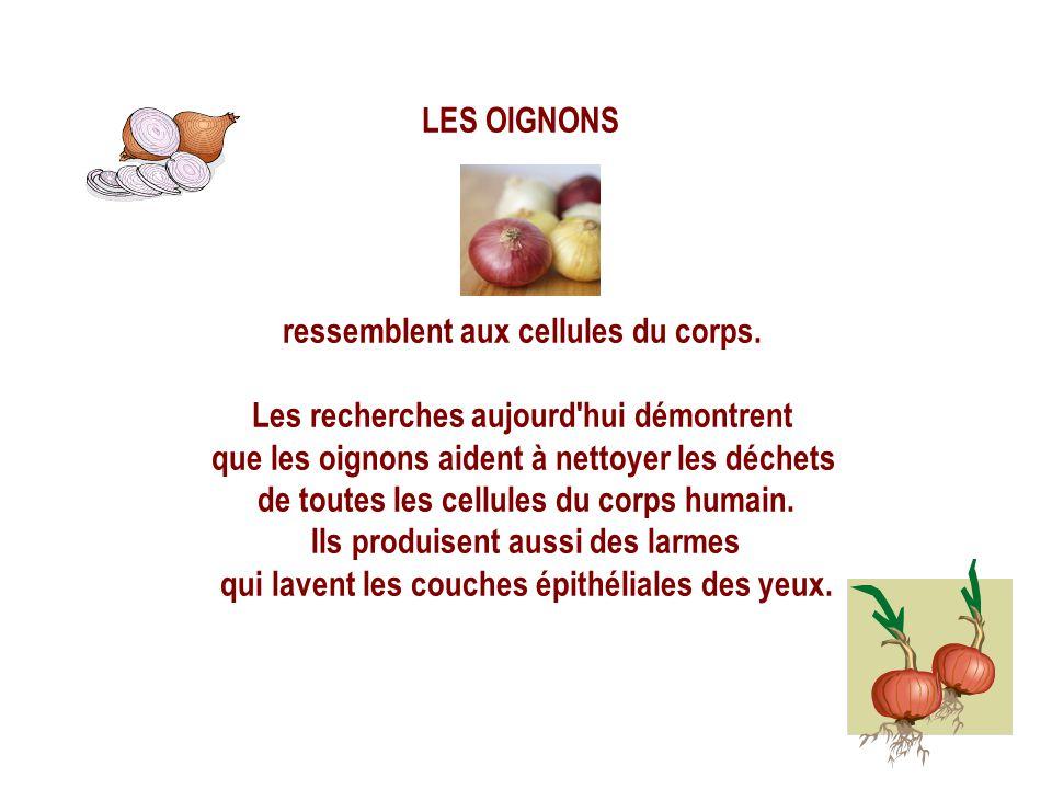 LES PAMPLEMOUSSES, ORANGES, et les autres fruits citronnés ressemblent aux glandes mammaires de la femme et assistent actuellement la santé des SEINS