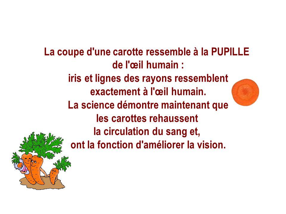 La coupe d une carotte ressemble à la PUPILLE de l œil humain : iris et lignes des rayons ressemblent exactement à l œil humain.