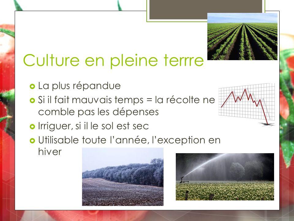 Culture en pleine terrre  La plus répandue  Si il fait mauvais temps = la récolte ne comble pas les dépenses  Irriguer, si il le sol est sec  Utilisable toute l'année, l'exception en hiver