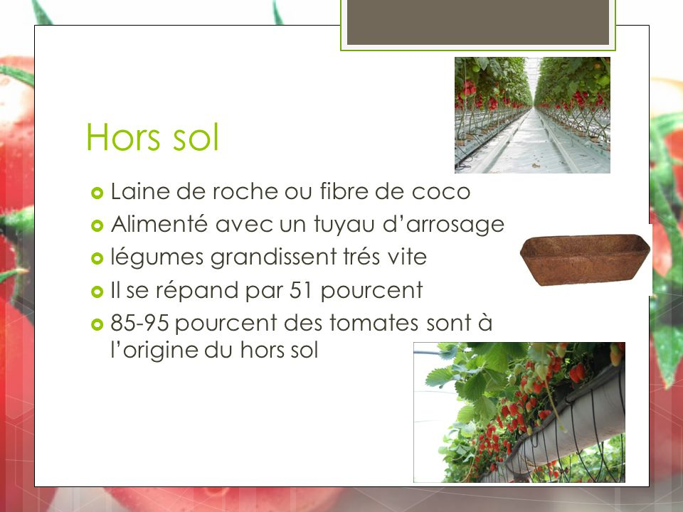 Hors sol  Laine de roche ou fibre de coco  Alimenté avec un tuyau d'arrosage  légumes grandissent trés vite  Il se répand par 51 pourcent  85-95 pourcent des tomates sont à l'origine du hors sol