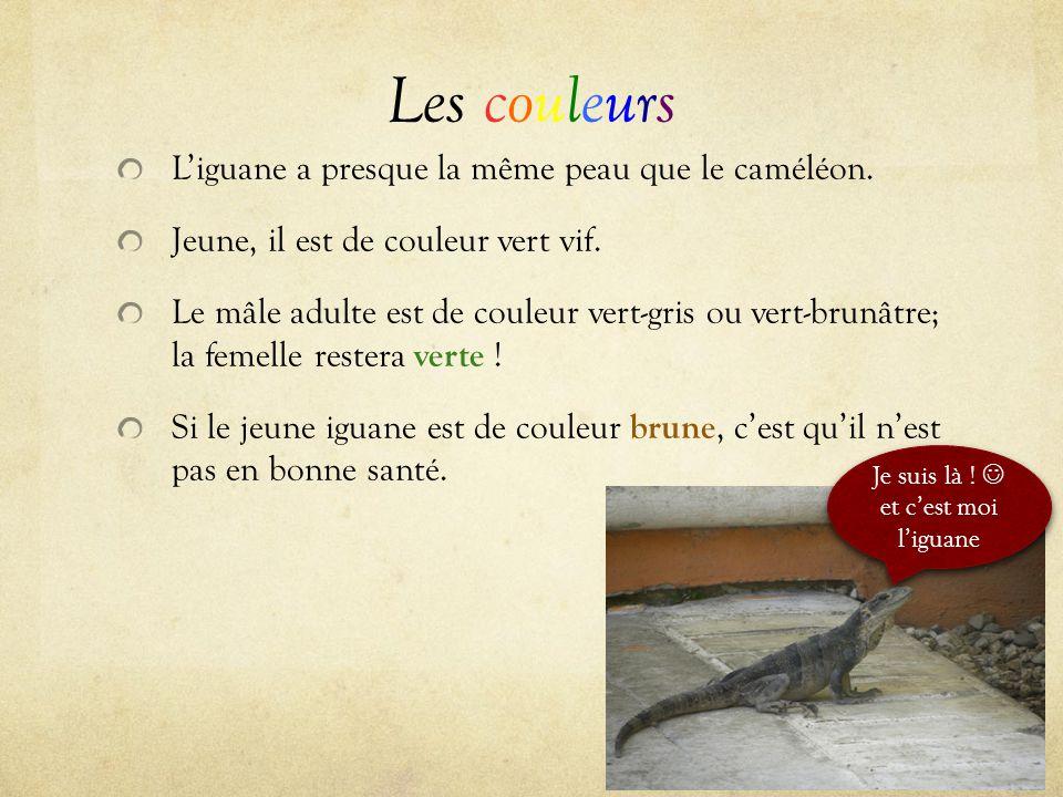 Les couleurs L'iguane a presque la même peau que le caméléon. Jeune, il est de couleur vert vif. Le mâle adulte est de couleur vert-gris ou vert-brunâ