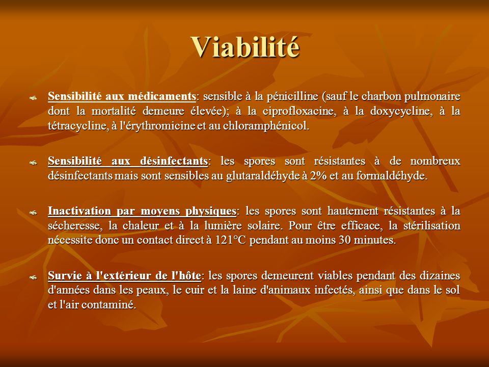 Viabilité  : sensible à la pénicilline (sauf le charbon pulmonaire dont la mortalité demeure élevée); à la ciprofloxacine, à la doxycycline, à la tétracycline, à l érythromicine et au chloramphénicol.