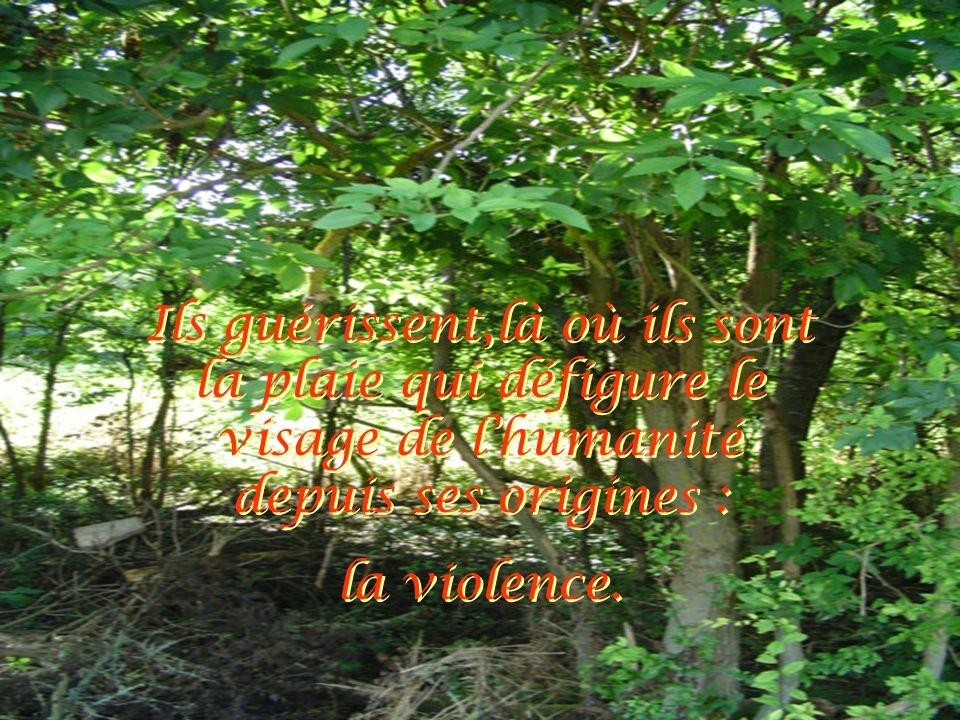 Ils guérissent,là où ils sont la plaie qui défigure le visage de l'humanité depuis ses origines : la violence. Ils guérissent,là où ils sont la plaie