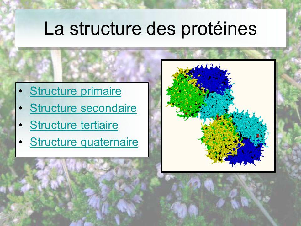 La structure des protéines •Structure primaireStructure primaire •Structure secondaireStructure secondaire •Structure tertiaireStructure tertiaire •Structure quaternaireStructure quaternaire •Structure primaireStructure primaire •Structure secondaireStructure secondaire •Structure tertiaireStructure tertiaire •Structure quaternaireStructure quaternaire