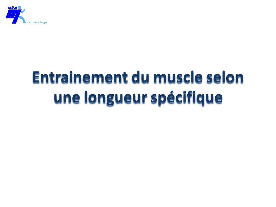 Entrainement du muscle selon une longueur spécifique