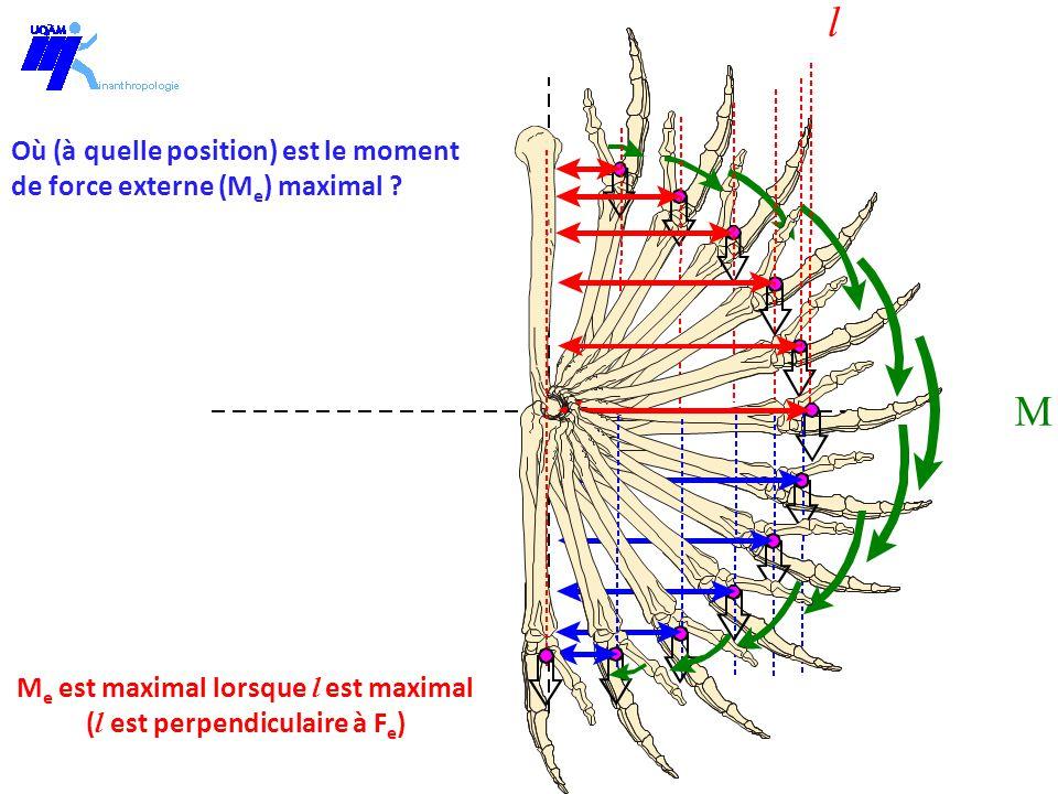 M l M e est maximal lorsque l est maximal ( l est perpendiculaire à F e ) Où (à quelle position) est le moment de force externe (M e ) maximal ?
