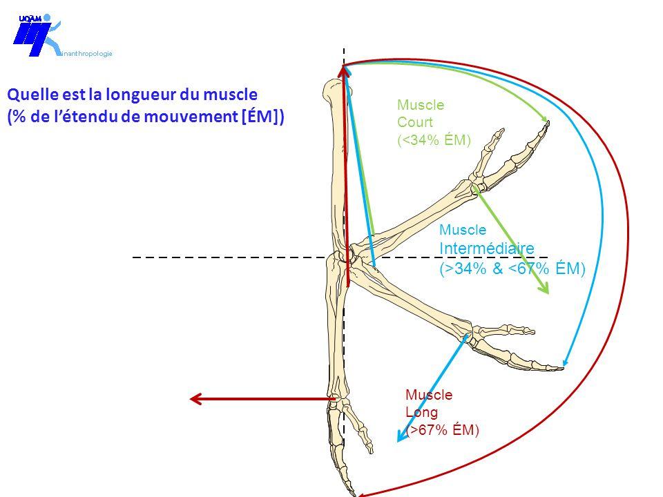 Muscle Intermédiaire (>34% & <67% ÉM) Muscle Court (<34% ÉM) Muscle Long (>67% ÉM) Longueur du muscle (M e maximal) Entraînement avec F e =g (M e maximal)
