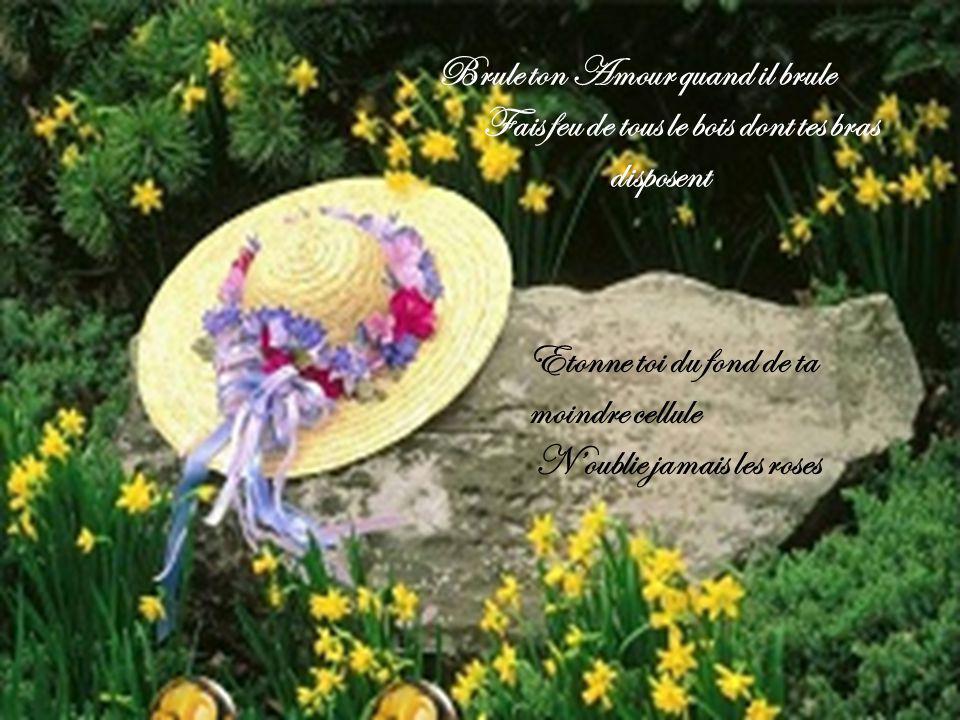 Brule ton Amour quand il brule Fais feu de tous le bois dont tes bras disposent Etonne toi du fond de ta moindre cellule N'oublie jamais les roses